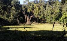 Camping Aguas Negras